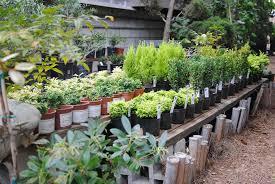 Landscape Nurseries Near Me by Bonsai U2014 City Farmers Nursery
