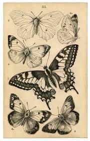 1000drawings snoogsandwilde art love pinterest watercolor