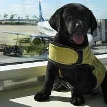 American Airlines Help Desk American Airlines Salaries Glassdoor