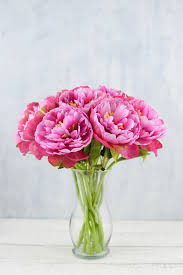 peony flower pink peony flowers 13