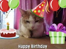 86 cat birthday wishes