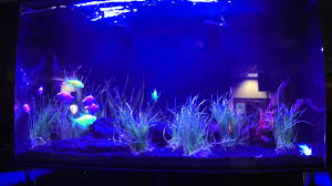 current usa orbit marine aquarium led light current usa marine orbit youtube