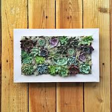 succulent wall garden with valerie jurado 89 u2014 makers mess