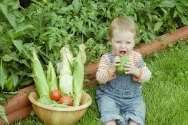 family vegetable garden everead favorite gardening picture books