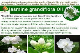 Most Fragrant Jasmine Plant - ayurvedic health benefits of jasmine grandiflora oil ayurvedic oils