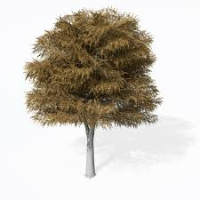 xfrog trees cutleaf european beech