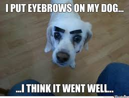 Eyebrow Meme - 20 eyebrow memes that are totally on fleek sayingimages com