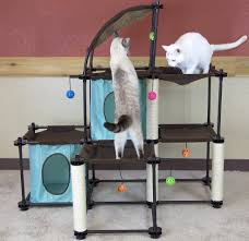 best cat toys for indoor cats what you need to know u2013 purrfect