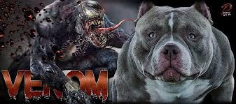 american pitbull terrier heat cycle news
