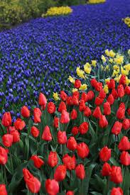 keukenhof flower gardens fendi flowerland u0026 keukenhof posh broke u0026 bored