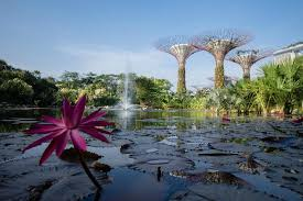 gardens by the bay singapore all you need to know before you