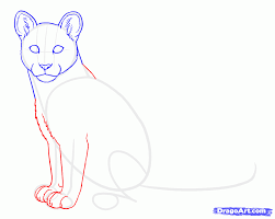 how to draw cougars mountain lion step by step forest animals