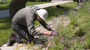 native plants of montana deep roots native plant garden thrives at um 50 years later youtube