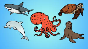 draw five how to draw ocean animals youtube