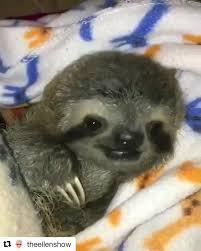 happy international sloth day a bit