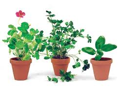 small potted plants six superb herbs for containers finegardening