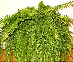 a guide to high humidity houseplants dengarden