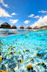 Kentucky exotic travelers images How to travel to tahiti solo the world 39 s most inspiring jpg
