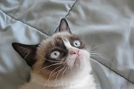 Grumpy Cat Meme No - grumpy cat is sad by xbloodeyex on deviantart