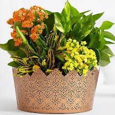 plant delivery buy plants online plant delivery starting at 19 99