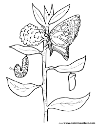 butterfly and caterpillar coloring page create a printout or