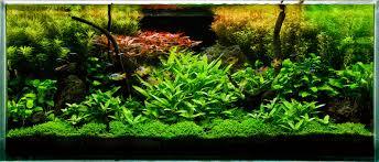 my planted aquarium imod