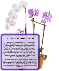 orchids care orchid care billy heromans flowers gifts