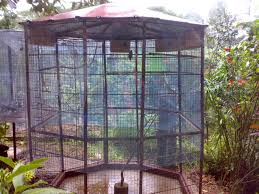Wish I Had This Aviary Coming Off The House For Our Parrots
