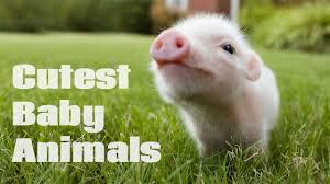 5 cutest animals ever to melt your heart dinocreek com amazing