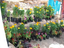 home gardening ideas simple home garden ideas flowers 43 hostelgarden net