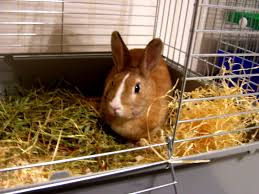 Bunny Cages File Rabbit In Cage Jpg Wikimedia Commons