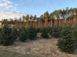 tree farm ready for a busy season despite national tree shortage