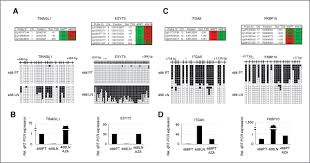 a comprehensive dna methylation profile of epithelial to