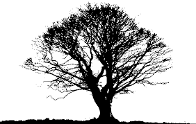 transparent png image black tree png photos 2017 png image free