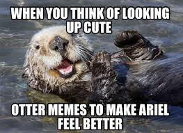 Feel Better Meme - meme creator when you think of looking up cute otter memes to make