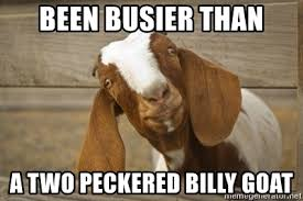 Billy Goat Meme - been busier than a two peckered billy goat why goats meme