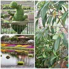 2017 epcot flower u0026 garden festival