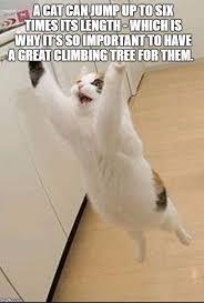 Make Custom Memes - 350 best memes i ve made images on pinterest meme generators