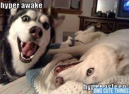 Cute I Love You Meme - cute puppy memes love pets wallpapers