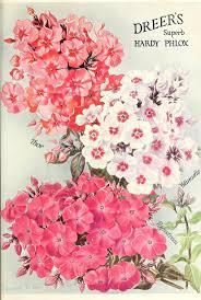 179 best victorian vintage flowers images on pinterest vintage