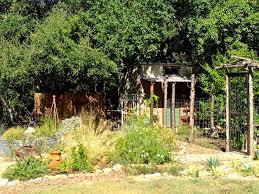 Deer Proof Fence For Vegetable Garden Hill Country Garden Charm In The Heart Of San Antonio U2026 Diana U0027s
