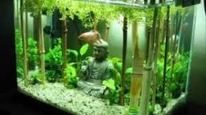 Dramatic Aquascapes Fishtank Evolution Planted Tank Aquascapes Youtube