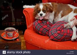 lady relaxing with her dog cavalier king charles spaniel and