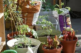 mini plants types of mini plants vegetable gardening in a small backyard