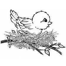 birds prey coloring pages bestofcoloring
