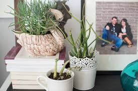 Home Decoration With Plants by Domestic Fashionista Decorating With Houseplants