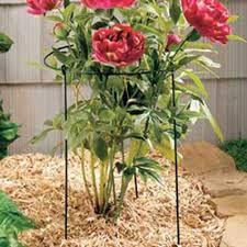Garden Supplies Garden Supplies Jung Garden And Flower Seed Company