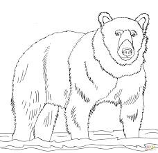 bear coloring pages pdf black free grizzly page source paddington