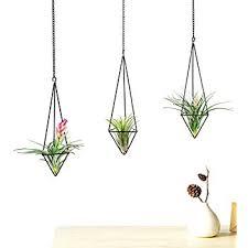 Hanging Air Plant   amazon com mkono 3pcs hanging air plant holder himmeli for