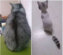 pictures of cats i find on the internet or i take myself home